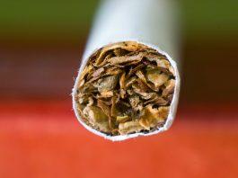 Sigara Markaları ve Nikotin Oranları